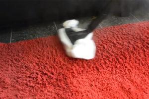 czyszczenie dywanu myjką parową
